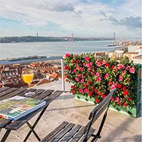 Rosodling på balkongen i växtvägg Minigarden Vertical