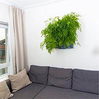 växtvägg med gröna växter i ett vardagsrum