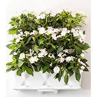 Växtvägg inomhus med vita blommor i Minigarden Vertical