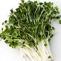 Groddfrö Broccoli-Ekologiskt frö till groddning och skott Broccoli