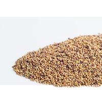 Groddfrö Rödklöver-Ekologiskt frö till groddning och skott rödklöver