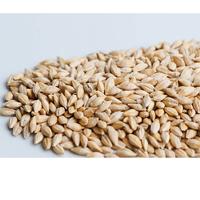 Groddfrö korn med skal, Ekologiskt frö till groddning och skott kron med skal