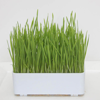 Groddbox Small sproutmaster, Litet groddningstråg, sproutmaster