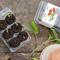 Odlingsset, Easy To Grow, Tomato Pot, Förodlingsset Easy to Grow, tomato pot