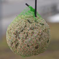 Talgboll 90g, 6-pack-Föda till småfåglar