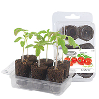 Odlingsset, Easy To Grow, Tomato Pot-Förodlingskit, Easy to Grow, busktomater