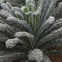 Odlingsset, Easy To Grow, Kale, Odlingsset för fröer - svartkål