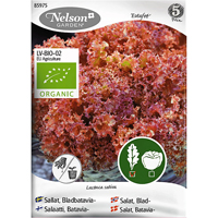 Bladbataviasallat Redlo, Organic-Ekologiskt frö till bladbatavia sallat, Redlo