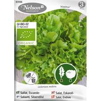 Friséesallat Nuance, Organic-Ekologiskt frö till friséesallat, Nuance