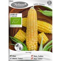 Majs Golden Bantam, Organic-Ekologiskt frö till majs, Golden bantam