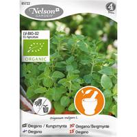 Oregano, Organic-Ekologiskt frö till oregano, Kungsmynt