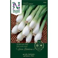 Salladslök, White Lisbon-Frö till Salladslök, Allium cepa 'White Lisbon'