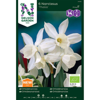 Orkidénarciss - Thalia-Lök EKO-Narc. Orkidé, Thalia, vit