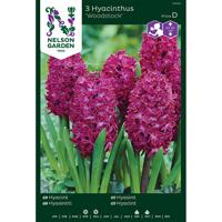 Hyacint - Woodstock-Lök Hyacint, Woodstock, mörkt purpurröd