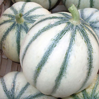 Melon, Santon-Melonfrö till melonen Santos