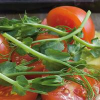 Groddar Ärtskott - Micro Leaf-Organiskt frö till groddar - Ärtskott
