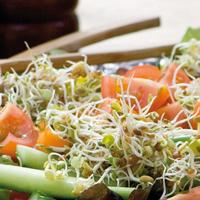 Groddar Hotmix - Primo Vitamino-Organiskt frö till groddar - Het mix
