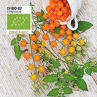 Tomat, Golden Currant, Organic-Ekologiskt frö till tomat Golden Currant
