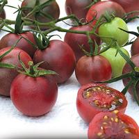 Körsbärstomat, Chocolate Cherry-Tomatfrö till körsbärstomaten Chocolate Cherry