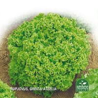 Sallad Organic BioSeed Lollo Bionda-Ekologiksa fröer till Sallad - Lollo Bionda - Lactuca sativa L.