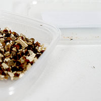 Galmygga för behandling av bladlöss
