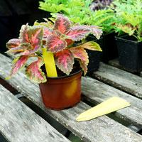 Plantetiketter 50-pack - Gula, Plantetiketter för växtnamn