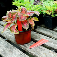 Plantetiketter 50-pack - Röda, Plantetiketter för växtnamn
