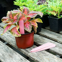 Plantetiketter 50-pack - Rosa, Plantetiketter för växtnamn