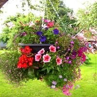 Plantopia ampel - stor - svart-Plantopia ampel för plantering av Hanging basket