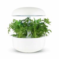 Frökapsel Plantui Smart Garden - Körvel-Frökapsel till Smart Garden inomhusodling - Anthriscus cerefolium