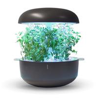 Frökapsel Plantui Smart Garden - Mejram-Frökapsel till Smart Garden inomhusodling - Origanum majorana