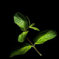 Frökapsel Plantui Smart Garden - Mynta-Frökapsel till Smart Garden inomhusodling - Mentha ssp