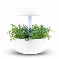 Frökapsel Plantui Smart Garden - Vild ruccola-Frökapsel till Smart Garden inomhusodling - Diplotaxis tenuifolia