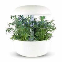 Frökapsel Plantui Smart Garden - Grönkål, Lacy-Fröer till Grönkål, Lacy