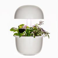 Plantui 3e, inomhusodling-Plantui 3e, inomhusodling för tre kapslar