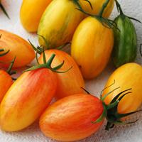 Tomat Artisan Blush Tiger-Frö till ovanlig tomat Artisan Green Tiger