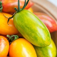 Tomatfrö Artisan Green Tiger