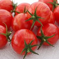 Tomat Artisan Pink Bumble Bee-Frö till ovanlig tomat Pink Bumble Bee