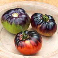 Tomat Indigo Blue Beauty-Frö till ovanlig tomat Indigo Blue Beauty