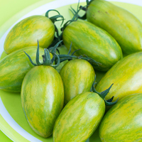 Tomat Artisan Green Tiger-Frö till ovanlig tomat Artisan Green Tiger