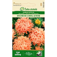 Aster Duchesse, coral & rose-Frö till Aster - Cuchesse, coral & rose