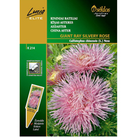 Aster Giant Ray Silvery Rose, Frö till Aster - Giant Ray Silvery Rose