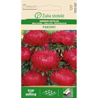 Aster Paeony, red-Frö till Aster - Paeony, red
