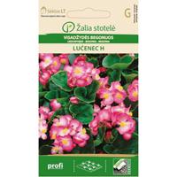 Begonia Lucenec, white/pink-Frö till Begonia - Lucenec, white/pink