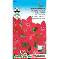 Blomstertobak Crimson Bedder-Frö till Blomstertobak - Crimson Bedder