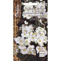 Begonia Ostas,  white-Frö till Begonia - Ostas,  white