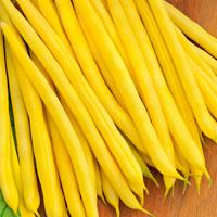 Böna Organic, French Bean - Fructidor-Frö till Böna Organic - French Bean - Fructidor