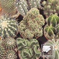 Kaktus mix-Frö till Kaktus - mix