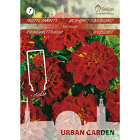 Tagetes, Red Brocade-