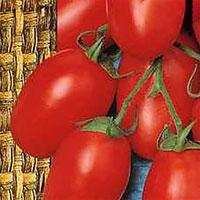 Tomat Chico III-Frö till Tomat - Chico III